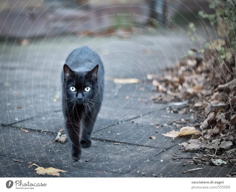Ghost Cat Environment Autumn Beautiful weather Street Animal Pet 1 Threat Dark Creepy Gray Black Surprise Horror Adventure Fear Bizarre Apocalyptic sentiment