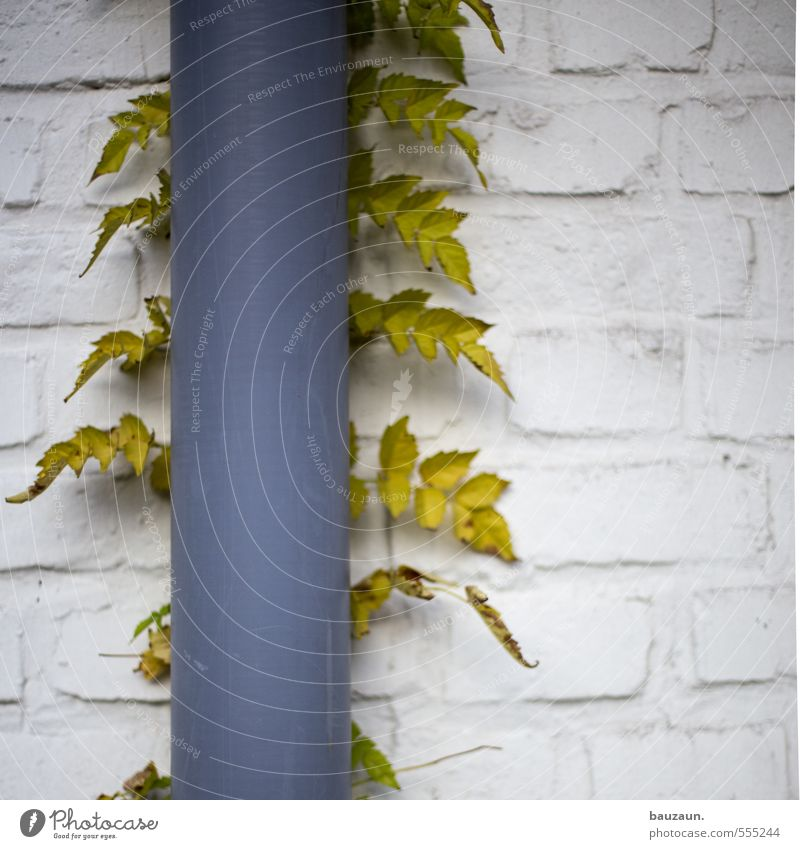 Plant Green White Leaf House (Residential Structure) Wall (building) Building Wall (barrier) Gray Garden Stone Line Facade Metal Growth Manmade structures