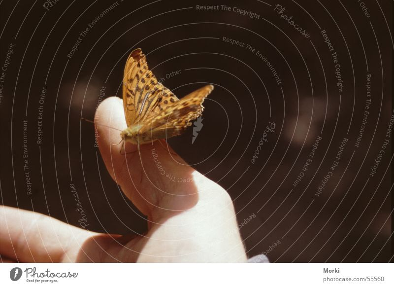 in harmony with nature Butterfly Hand Trust Peace Animal Insect Caresses Delicate Connectedness Together Light Sun Harmonious Smooth Nature Be confident nice