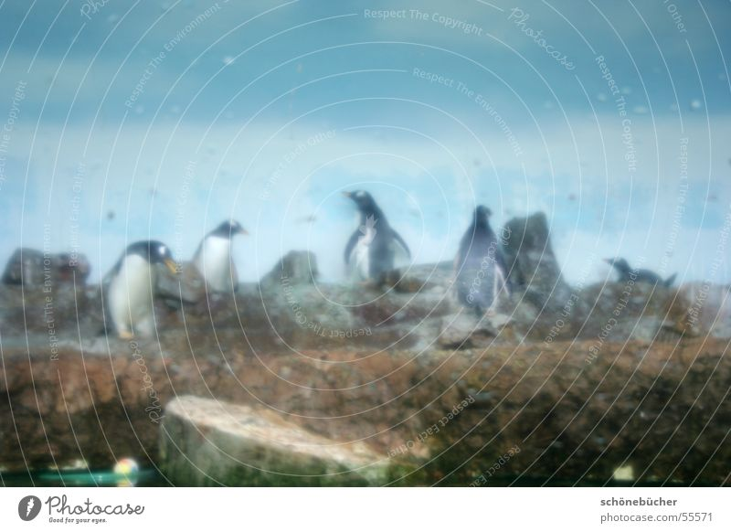Water Sky Stone Fog Drops of water Zoo Damp Narrow Captured Penguin Pane Cage Antarctica Sprinkled