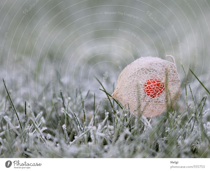 Nature Green White Plant Calm Cold Environment Autumn Grass Natural Garden Lie Brown Ice Orange Esthetic