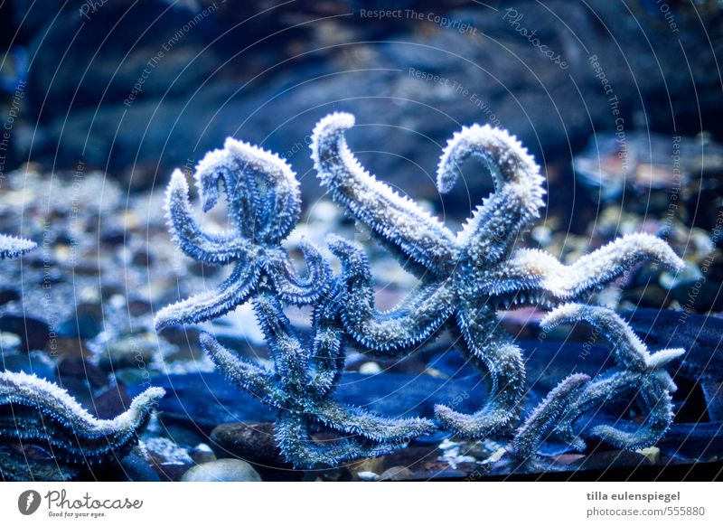 Blue Water Ocean Animal Cold Natural Wet Stars Star (Symbol) Exotic Aquarium Stick Side by side Starfish Underwater aquarium