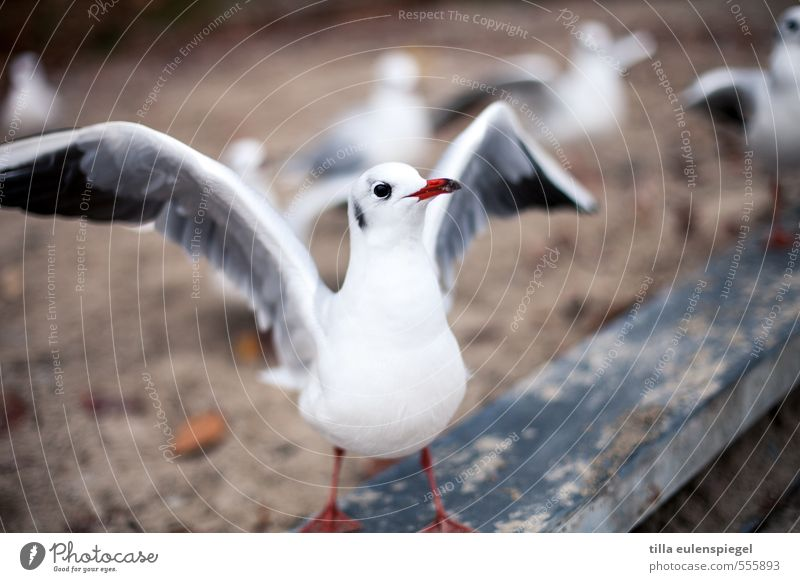 White Animal Bird Observe Wing Seagull Expectation Anticipation