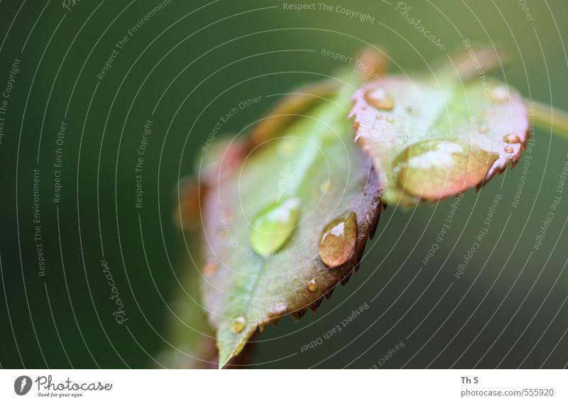 Nature Green Plant Leaf Rain Authentic Esthetic Wet Drop Serene Harmonious Damp Patient