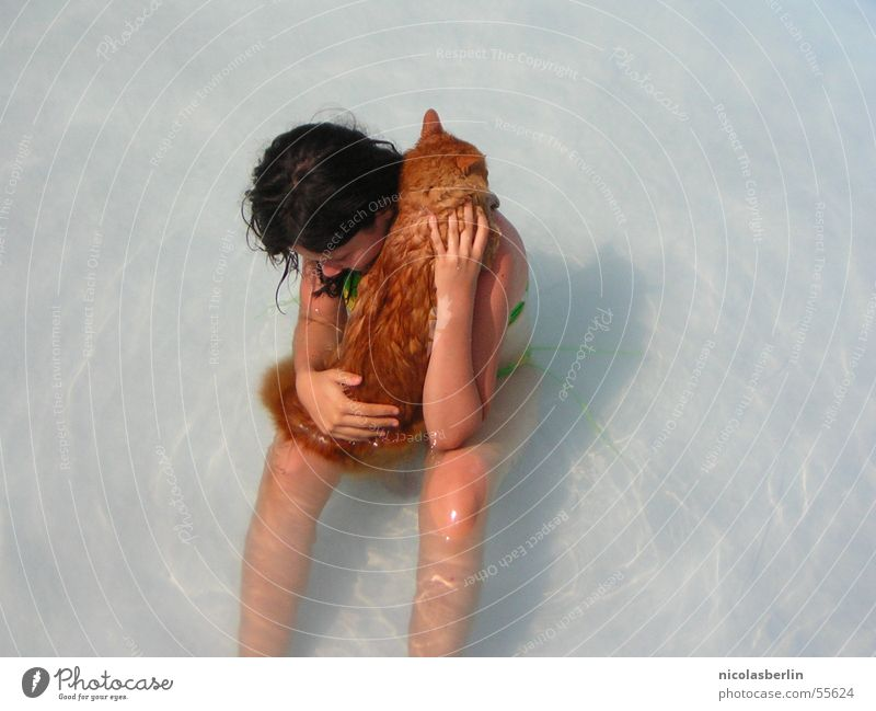 you don't bathe in cats Cat Girl Child Swimming pool Physics Peru leo Water Warmth