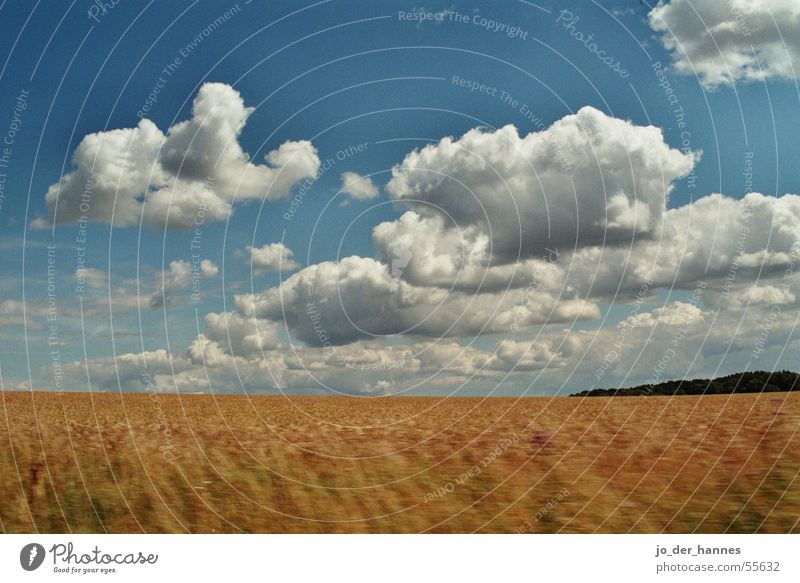 cloud field Clouds Field Yellow Horizon crop Grain forest blue