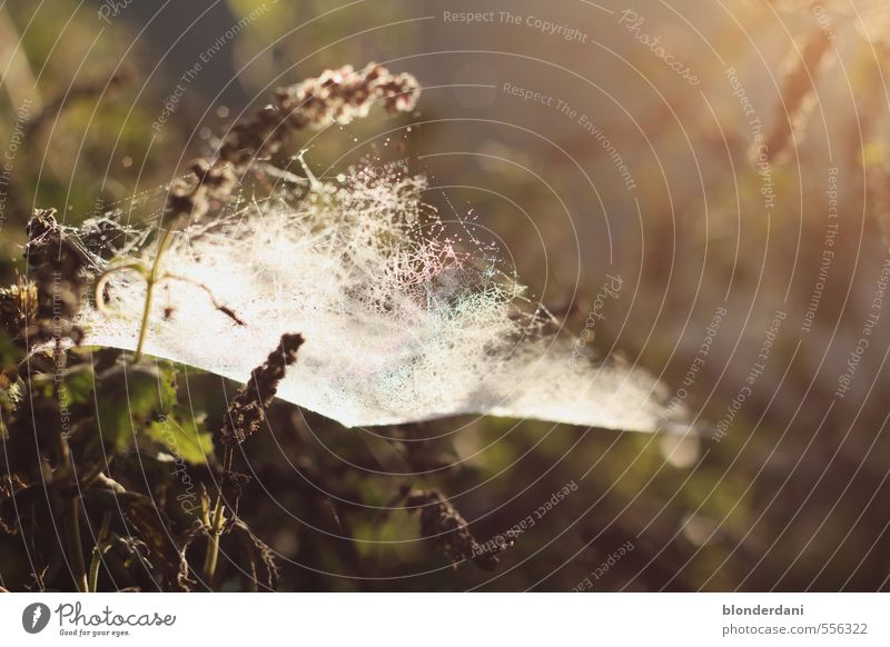 Network Nature Landscape Beautiful weather Happy Calm Spider's web Flower Spin Meadow Sun Dawn spun in Ambush Colour photo Exterior shot Structures and shapes