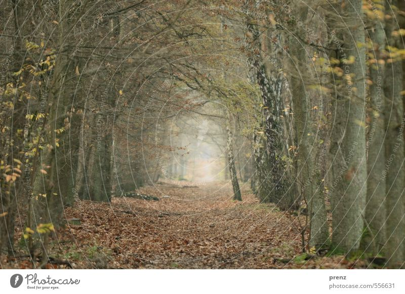 Forest path - Grunewald Environment Nature Plant Autumn Winter Brown Gray Leaf Lanes & trails Twigs and branches Beech tree Oak tree Avenue Colour photo