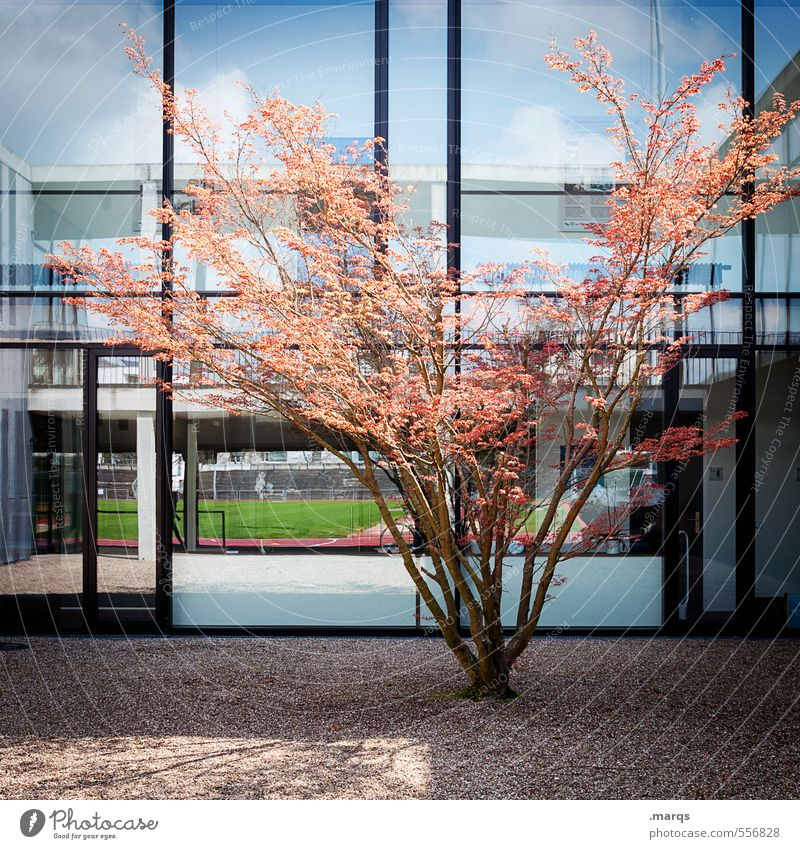 Nature Blue Tree Black Window Life Autumn Building Architecture Style Bright Line Orange Facade Design Modern