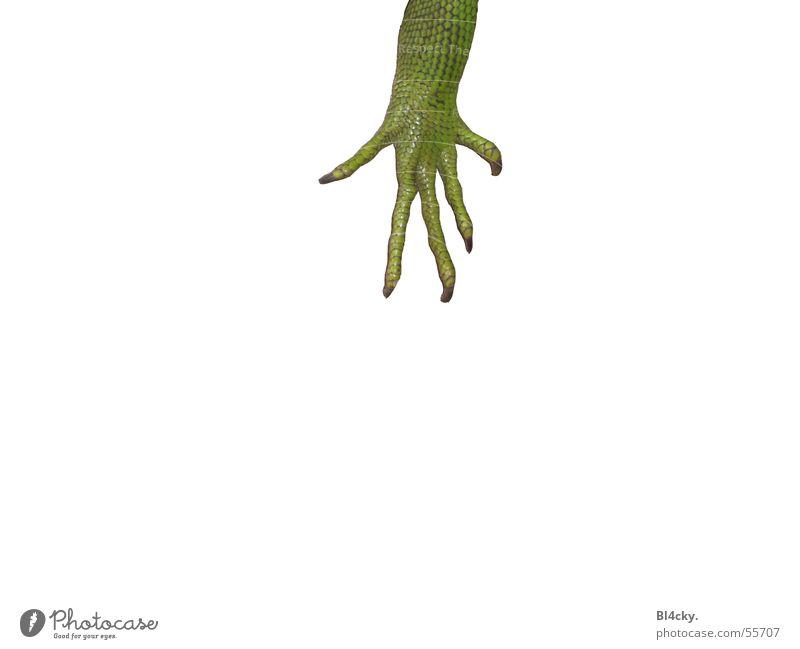 Green Fingers Nail Reptiles Claw Iguana Green Iguana