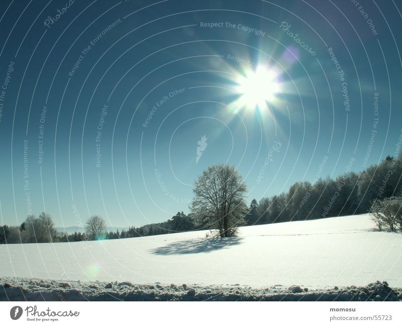 in winter Winter Tree Light White Cold Snow Landscape Sun Lighting Sky Blue Far-off places