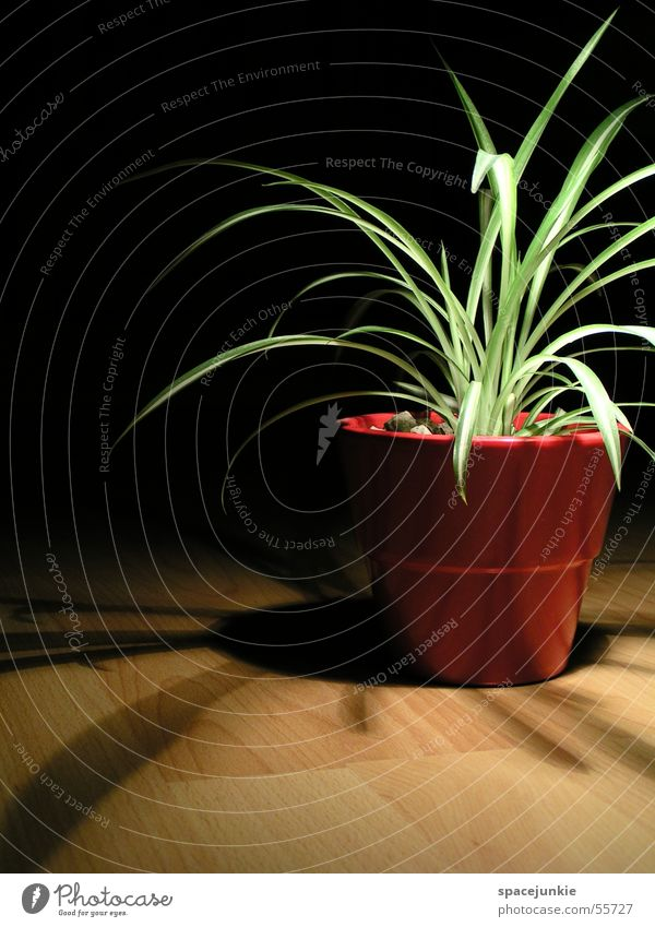 shadow plant Houseplant Pot Gravel Red Pottery Laminate Shade plant Black Light red pot Shadow