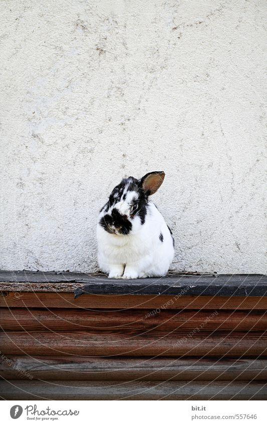 White Loneliness Animal Black Baby animal Small Garden Soft Easter Pelt Illness Farm Pet Mammal Hare & Rabbit & Bunny Cuddly