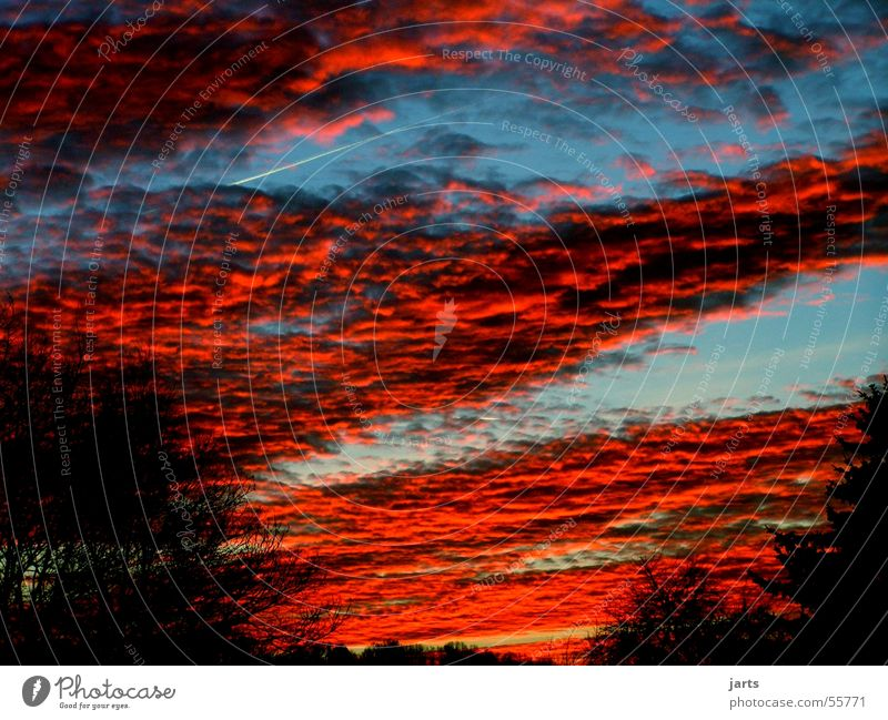 ...fire in the sky Clouds Tree Altocumulus floccus Red Sunset Sky Dusk Blue jarts