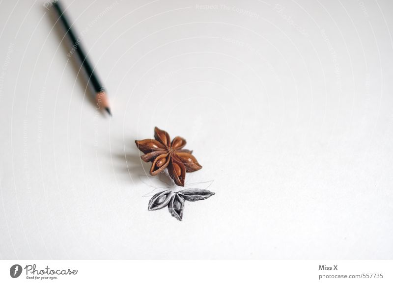 star anise Herbs and spices Leisure and hobbies Art Fragrance Draw Star aniseed Pencil Painting (action, artwork) Paper Notepaper Drawing pencil Colour photo