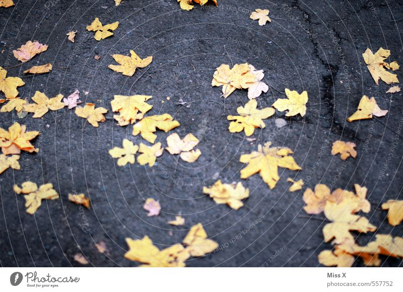 Nature Leaf Yellow Street Autumn Lanes & trails Lie Star (Symbol) Ground Autumn leaves Autumnal Maple leaf Autumnal colours Starry sky