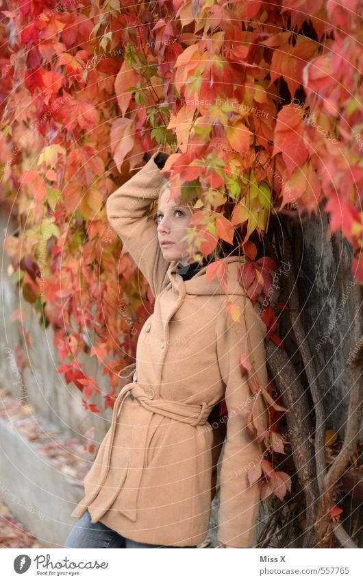 Red wine Human being Feminine Young woman Youth (Young adults) Woman Adults 1 18 - 30 years Autumn Bushes Ivy Leaf Fashion Jacket Coat Blonde Beautiful