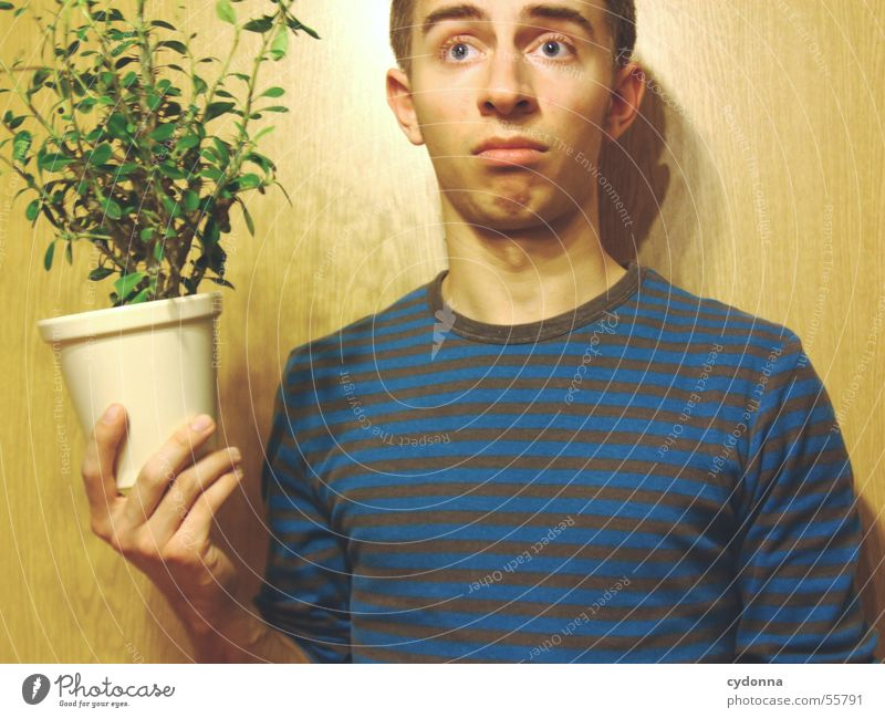 Human being Man Hand Plant Face Wall (building) Wood Style Funny Posture Facial expression Sweater Flowerpot Joke Absurdity Wood grain