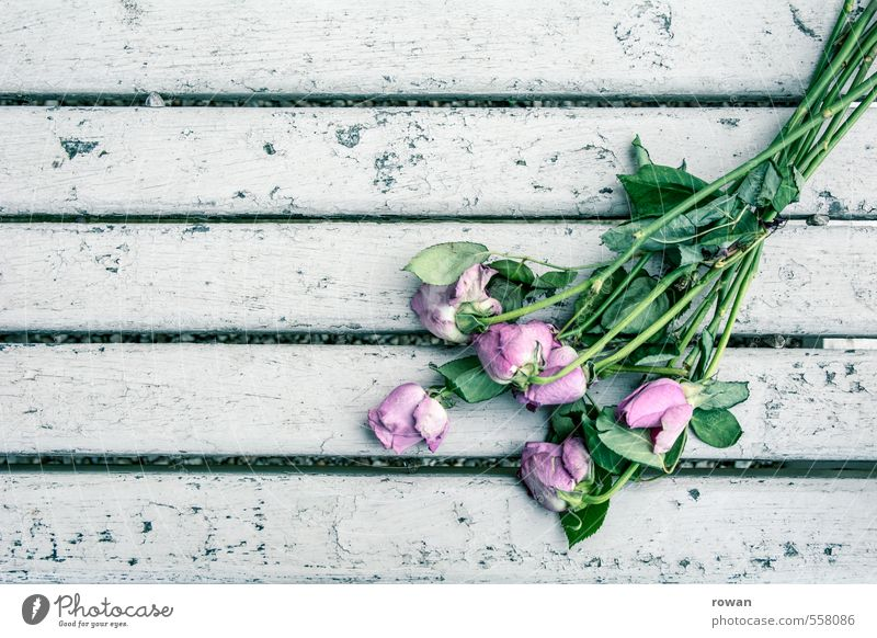 forgotten Rose Violet Pink Love Romance Disappointment Loneliness Relationship Transience Bleached Death Old Bouquet Forget White Terminal care Funeral service