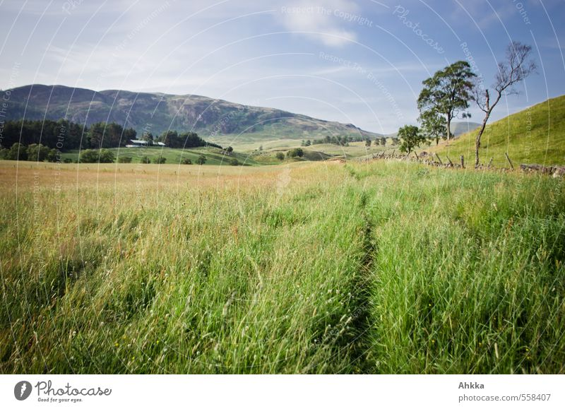 Nature Green Plant Summer Tree Landscape Calm Joy Meadow Lanes & trails Grass Playing Horizon Moody Idyll Walking