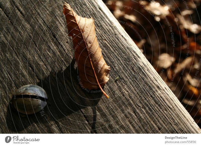 Old Green Leaf Autumn Wood Warmth Metal Dirty Small Drops of water Arrangement Bench Floor covering Insect Derelict Dry