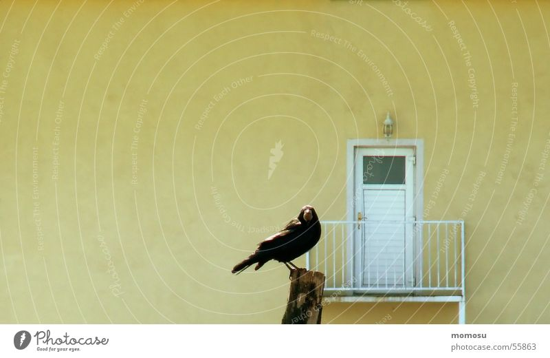 House (Residential Structure) Yellow Wall (barrier) Bird Door Balcony Watchfulness Pole Raven birds Crow