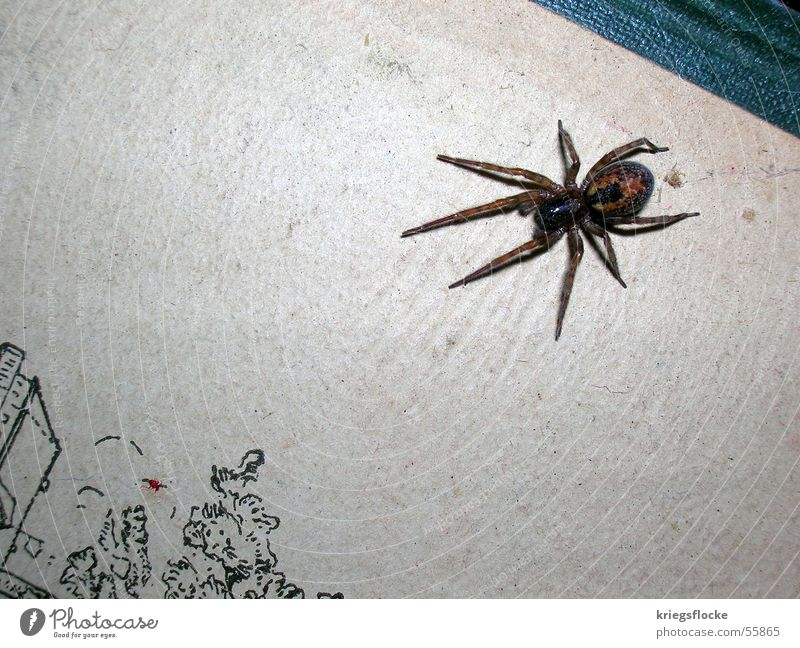 arach Spider Eight-legged Disgust Book Attack Fear