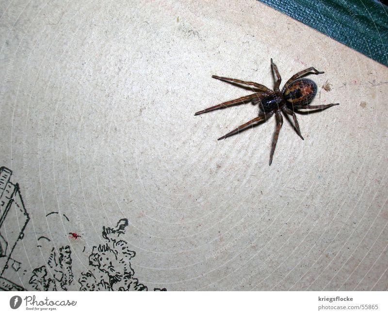 Fear Book Disgust Spider Attack Eight-legged