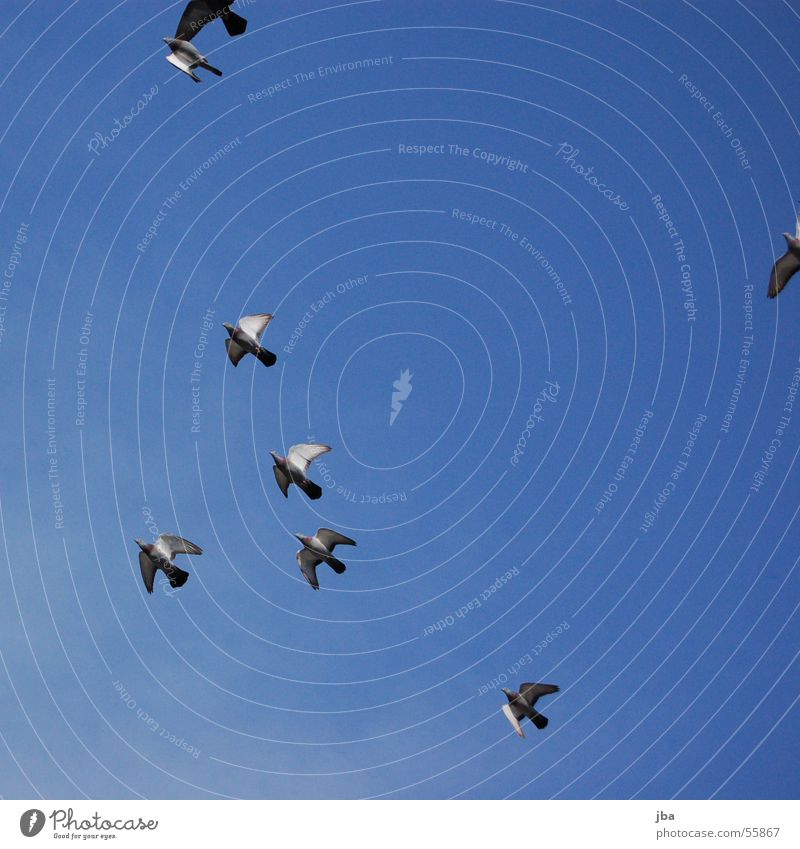 Sky Clouds Freedom Bird Flying Aviation Multiple Pigeon