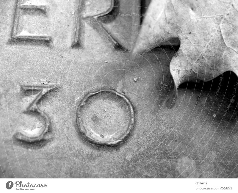 30s Leaf Oak leaf Remember Memory Inscription Sublime Bronze Digits and numbers Black White Characters Black & white photo him