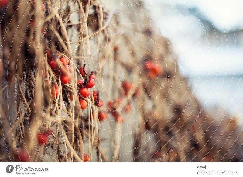 Nature Plant Red Environment Natural Bushes Rose hip