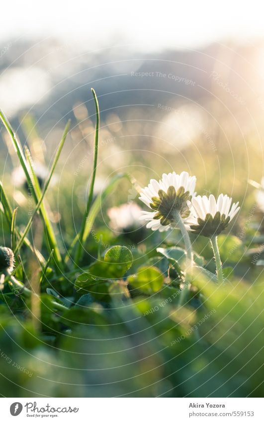 Growing up together Nature Plant Animal Sunlight Spring Beautiful weather Flower Grass Park Meadow Observe Touch Blossoming Glittering Growth Together Natural