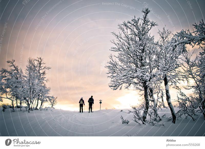 into the sun Harmonious Senses Vacation & Travel Trip Adventure Snow Winter vacation Skiing Friendship Couple Partner Life 2 Human being Nature Landscape Tree