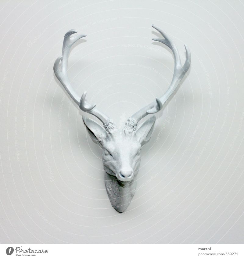 it stings Art Animal Wild animal Animal face White Deer stag's antlers Antlers Decoration Living or residing Wall (building) Interior shot Deserted Day
