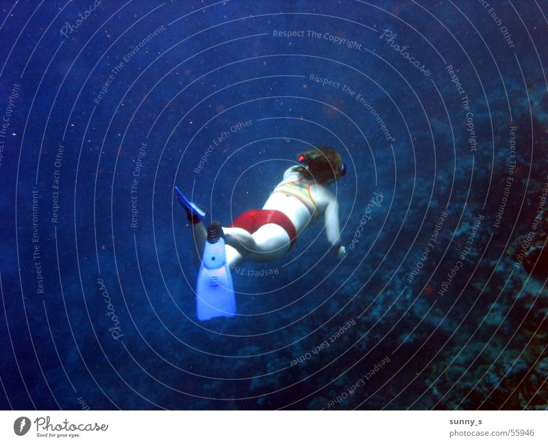 ever deeper Dive Snorkeling Water Underwater photo Water wings