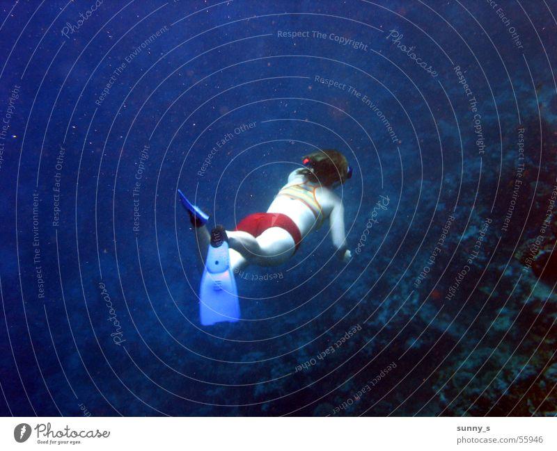 Water Dive Water wings Snorkeling