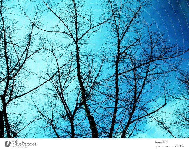 Nature Old Sky Blue Winter Sadness Growth Branch Seasons Beautiful weather Botany Treetop Twig Biology Holiday season Deciduous tree