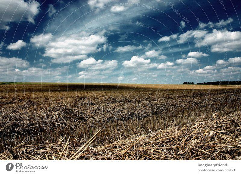 Field Harvest Grain