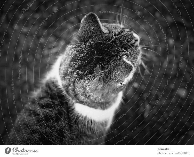 Cat Animal Movement Adventure Sign Pelt Discover Pet Resolve Tabby cat