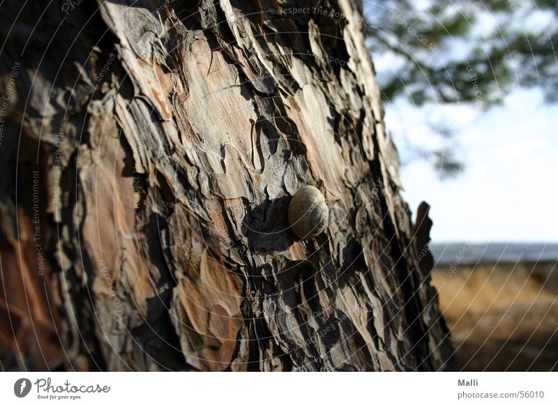 Tree Sun Summer Wood Warmth Brown Physics Tree trunk Snail Greece Slowly Crete Wood flour Stone pine Crete