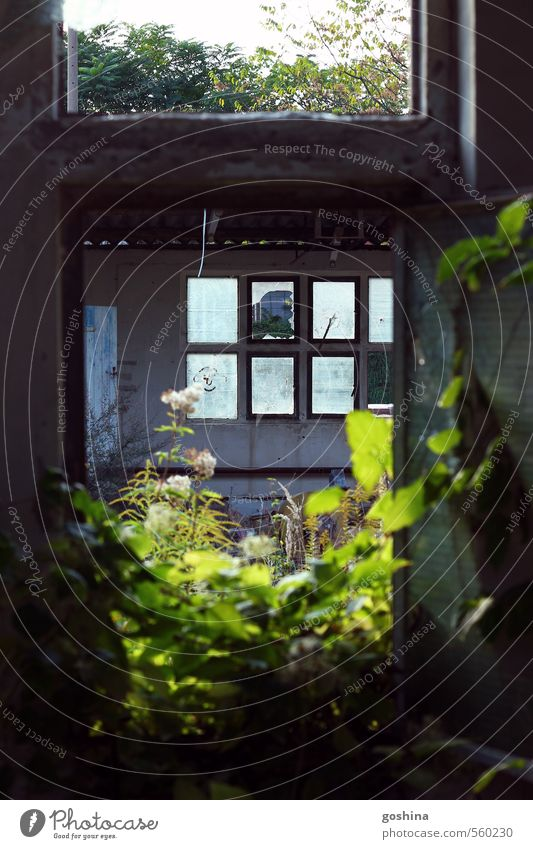 windows through a window House (Residential Structure) Facade Sustainability Destruction Decline Plant Factory Car Window Glass Smashed window Idyll Morbid Dark