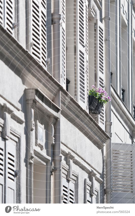 dashes of colour Flower Pot plant Paris Town Downtown Old town House (Residential Structure) Building Facade Window Beautiful Uniqueness Gray Pink White Shutter
