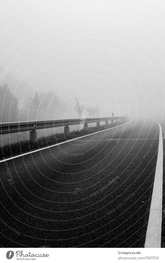 ...into the fog Environment Nature Landscape Sky Clouds Autumn Fog Plant Tree Leaf Transport Traffic infrastructure Street Stone Dark Cold Black White