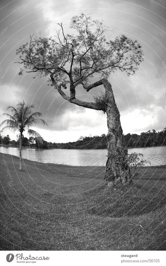 TREE Nature Sky Singapore tree landscape outside lac grass Palm tree Exterior shot
