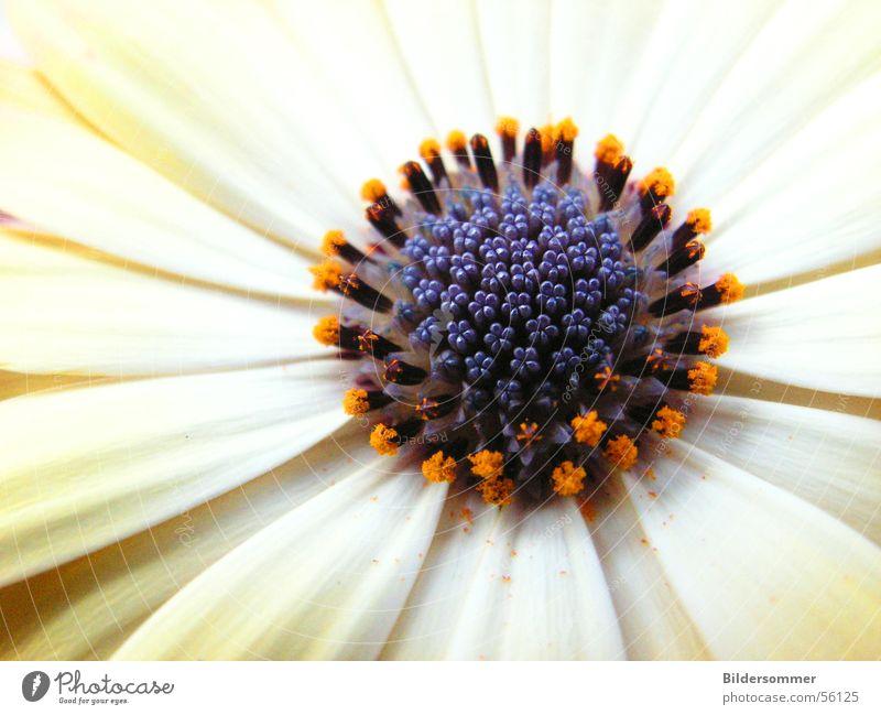 Nature White Flower Orange Violet