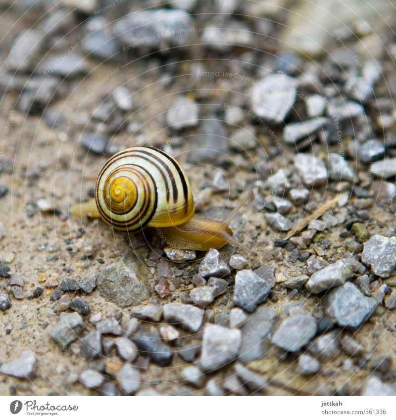 mobile home Environment Nature Animal Earth Snail 1 Living or residing Small Patient Calm Endurance Movement Advancement Speed Logistics Slowly sluggishness