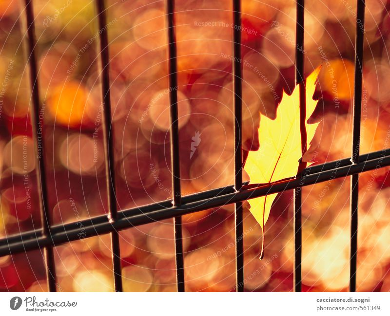 Autumn - pure matter of opinion Environment Beautiful weather Leaf Fence Exceptional Threat Hot Crazy Point Yellow Gold Orange Red Warm-heartedness Surprise