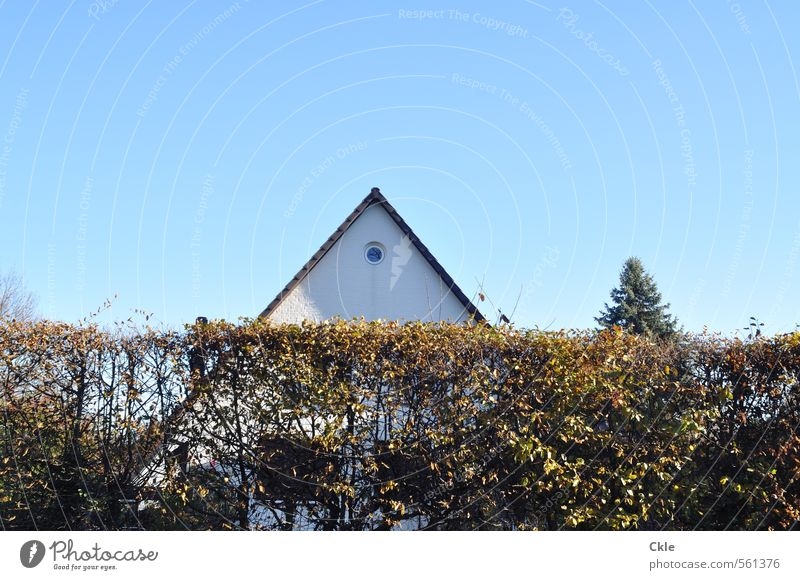 upstarts Flat (apartment) House (Residential Structure) Dream house Sky Cloudless sky Sunlight Autumn Beautiful weather Tree Bushes Garden Detached house