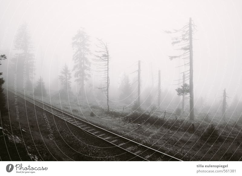 ghost Environment Nature Autumn Winter Bad weather Fog Tree Forest Hill Train travel Rail transport Railroad Railroad tracks Railroad system Threat Dark Cold