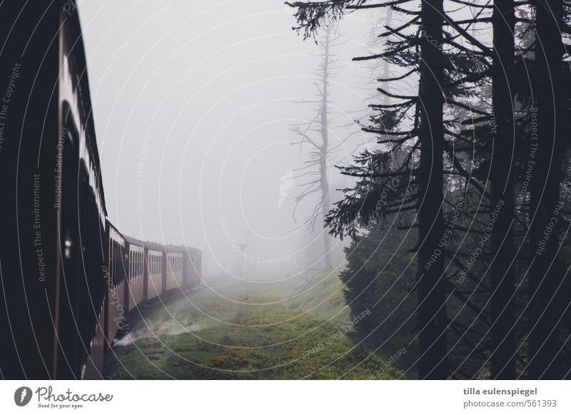 ghost train Bad weather Fog Tree Forest Passenger traffic Train travel Rail transport Railroad Railroad car Driving Dark Original Transport Vacation & Travel
